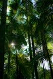 Palmtrees nella foresta pluviale Immagine Stock Libera da Diritti
