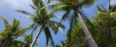 Palmtrees no céu Imagens de Stock