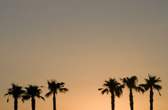 Palmtrees no por do sol Foto de Stock Royalty Free