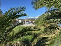 Palmtrees och hotell Arkivbild