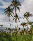 Palmtrees op Filippijns eiland royalty-vrije stock afbeelding