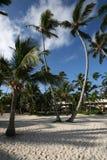 Palmtrees op hemel Royalty-vrije Stock Foto's