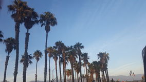 Palmtrees på den Kalifornien stranden Royaltyfri Fotografi