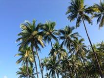 Palmtrees på den Ngwe Saung stranden Arkivfoton
