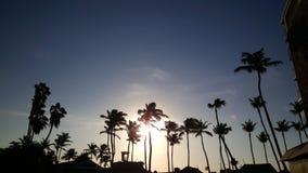 Palmtrees på den norr stranden på Aruba Fotografering för Bildbyråer