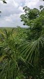 Palmtrees på djungeln royaltyfria bilder