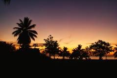 Palmtrees på solnedgången i Samoa Arkivbild