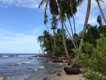 Palmtrees på testranden Fotografering för Bildbyråer