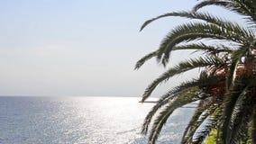 Palmtrees passant une plage 1920x1080px banque de vidéos