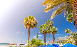 Palmtrees in Puerto Rico Stock Photography