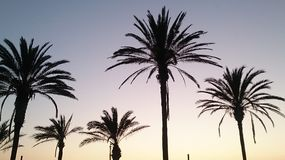Palmtrees Royalty Free Stock Photo