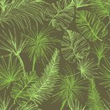 Palmtrees Seamless Pattern. Green coconut or queen palm trees with leaves. Beach and rainforest, desert coco flora. Foliage of subtropical fern. Green palmae royalty free illustration