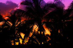 Free Palmtrees Silhouette On Sunset In Tropic Royalty Free Stock Photography - 26228057