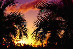 Palmtrees  silhouette on sunset in tropic Stock Photos
