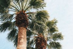 Palmtrees. And skies Royalty Free Stock Images