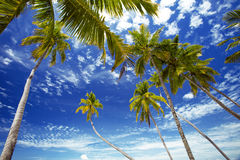 Palmtrees and sky, maldives. Palmtrees and sky from below, maldives Stock Photos