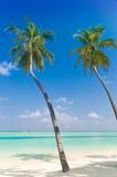 Palmtrees su una spiaggia tropicale Immagini Stock