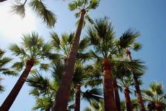 Palmtrees sulla spiaggia a Cannes Immagini Stock Libere da Diritti