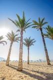 Palmtrees sulla spiaggia di Poniente Immagine Stock Libera da Diritti