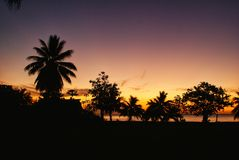 Palmtrees at sunset in samoa. Silhouette of palmtrees with the sun going down in the sea in the background on a tropical island Stock Photography
