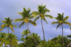 Palmtrees tops. Palmtrees on a sky background Stock Photos