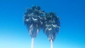 Palmtrees. Two palmtrees up above in the blue sky Royalty Free Stock Photography