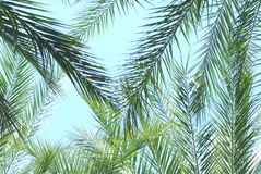 Palmtrees. Under the palmtrees, at Los Angeles Stock Image