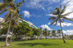 Palmtrees under the wind in a sunny day. Miami Beach, Florida Stock Photo