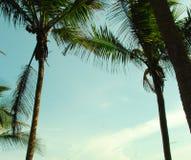 Palmtrees. Vacation costarica sky blue royalty free stock photos