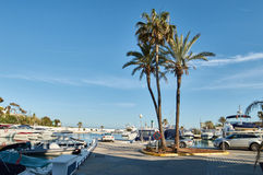 Palmtrees and yachts. In Marbella port Royalty Free Stock Photography