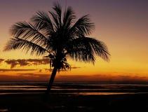Palmtreesilhouet Stock Afbeeldingen