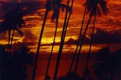 palmtreesolnedgång tahiti Arkivbild
