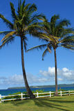 palmtreeson Гавайских островов Стоковое фото RF