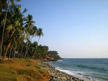 palmtreesvarkala arkivfoto