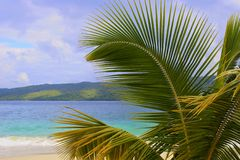 Palmtreetak en Caraïbisch strand, Dominicaanse republiek stock foto's