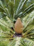 Palmtreetop Stock Foto's