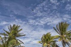 Palmtress, hemel, wolken en vogels Royalty-vrije Stock Afbeeldingen