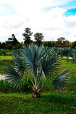 Palmtuin Royalty-vrije Stock Afbeelding