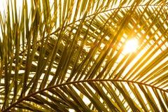 Palmvarenblad met schaduw en zon Stock Afbeelding