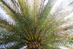 Palmverlof stock afbeeldingen