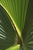 Palmwedel-Hintergrund lizenzfreies stockfoto