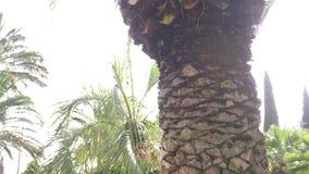 Palmweg op een zonnige dag, slow-motion 4k, stock video