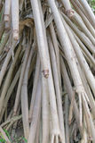 palmwortels Royalty-vrije Stock Fotografie