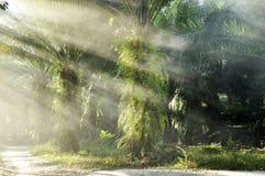 Palmy światła gospodarstwa rolnego dnia Plenerowa mgła Zdjęcia Stock