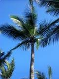 palmy obrazy royalty free