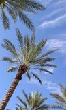 palmy zdjęcie stock