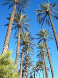 palmy Fotografia Stock