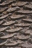 Palmy barkentyna Obrazy Stock