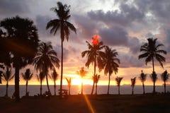Palmy drzewo na tle kolorowy zmierzch chmurny niebo i obrazy stock