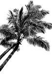 palmy dwa ilustracja wektor